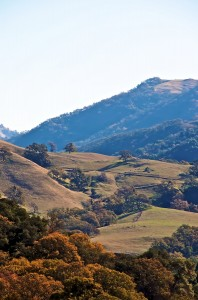 Ohlone Regional Wilderness